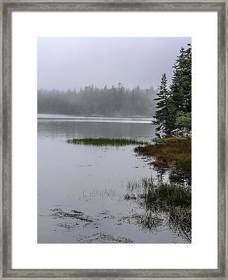 Ship Harbor Nature Trail, Acadia National Park Framed Print