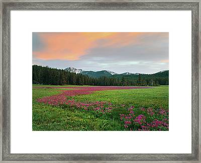 Shooting Stars Framed Print by Leland D Howard