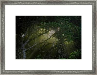 Framed Print featuring the photograph Shore Light by Bill Posner