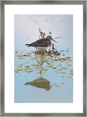 Shorebird Reflection Framed Print