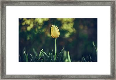 Silence Is Golden Framed Print