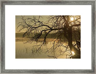 Silhouette Of A Tree By The River At Sunrise Framed Print