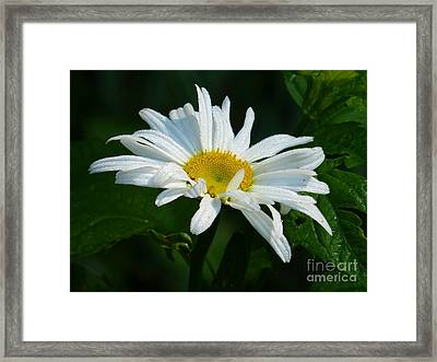 Framed Print featuring the photograph Simple Perfection by Rosanne Licciardi