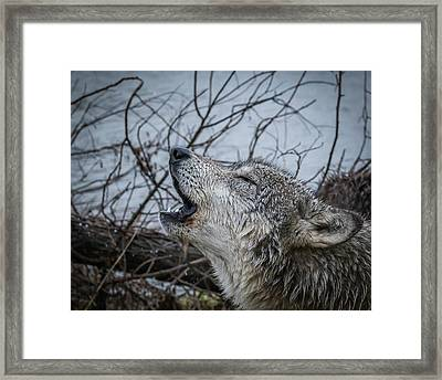 Singing The Song Of My People Framed Print