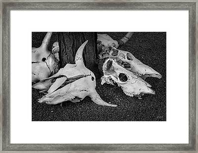 Framed Print featuring the photograph Skulls V Bw by David Gordon