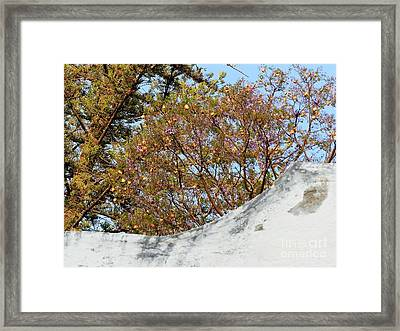 Framed Print featuring the photograph Sky Bouquet by Rosanne Licciardi