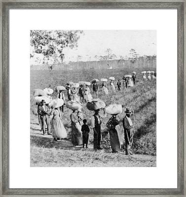 Slaves In The Cotton Fields Framed Print by Fotosearch