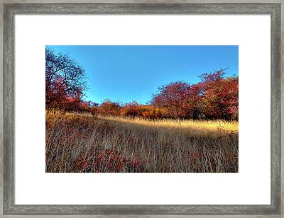 Framed Print featuring the photograph Sliver Of Sunlight by David Patterson