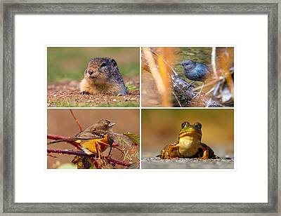 Small Animal Collage Framed Print