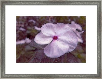 Small Flower Framed Print