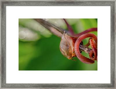 Snails Pace Framed Print