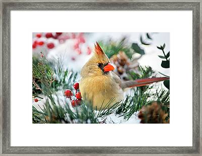 Framed Print featuring the photograph Snow Cardinal by Christina Rollo