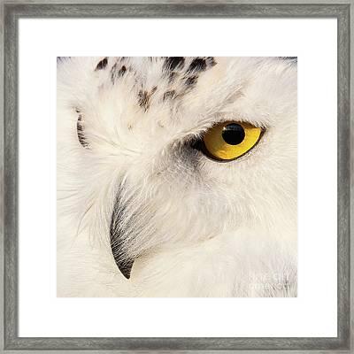 Snow Owl Eye Framed Print