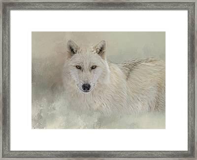 Snow Wolf Framed Print