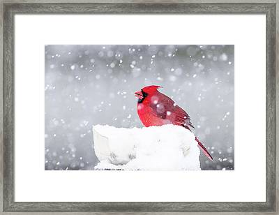 Framed Print featuring the photograph Snowy Cardinal by Lori Coleman