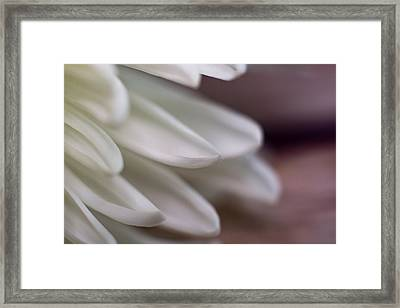 Soft White Petals-1 Framed Print
