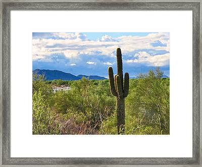 Sonoran Desert Landscape Post-monsoon Framed Print