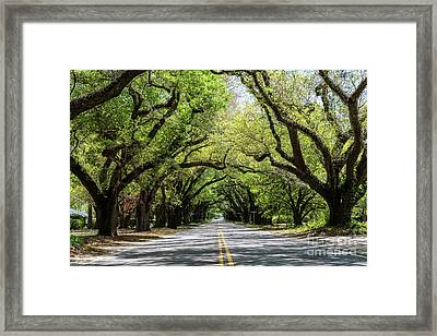 South Boundary Ave Aiken Sc Framed Print