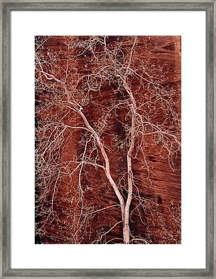 Southwest Texture Framed Print by Leland D Howard