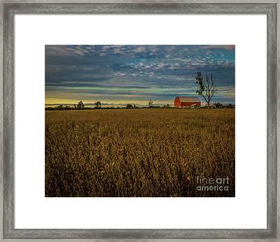 Soybean Sunset Framed Print