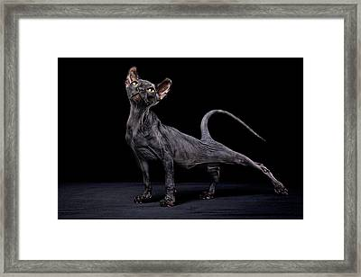 Sphynx Cat Framed Print by Alexandra Draghici