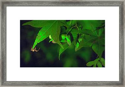 Spider At Night On A Leaf Framed Print