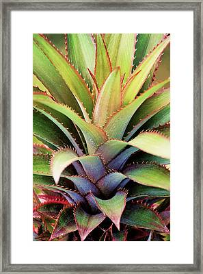 Framed Print featuring the photograph Spiny Succulent I by Leda Robertson