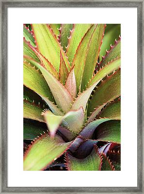 Framed Print featuring the photograph Spiny Succulent II by Leda Robertson
