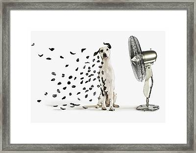 Spots Flying Off Dalmation Dog Framed Print by Gandee Vasan