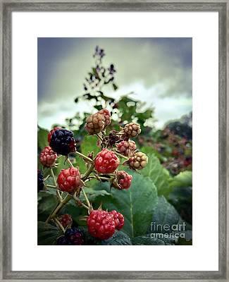 Early Summer Blackberries Framed Print by JMerrickMedia