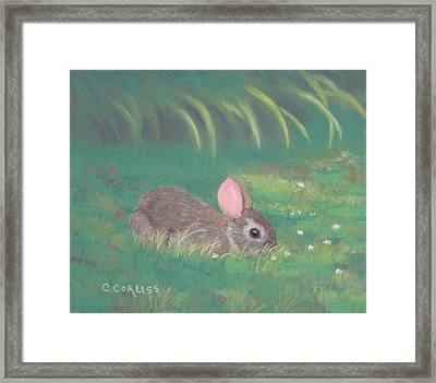 Spring Clover Framed Print