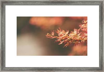 Spring Or Fall Framed Print