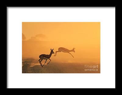 Splendor Framed Prints