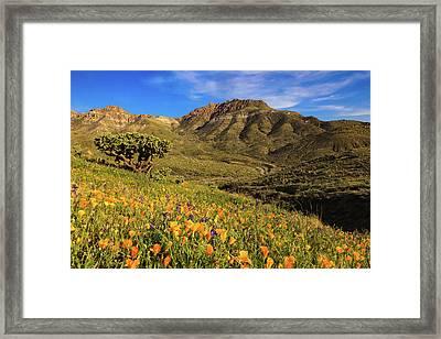 Springtime In The Desert Southwest Framed Print