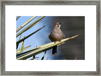 Squawker Framed Print