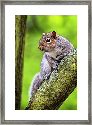 Squirrel At Greenwich Park Framed Print