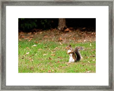 Framed Print featuring the photograph Squirrel Stood Up In Grass by Scott Lyons