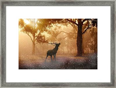 Stag In The Forest Framed Print