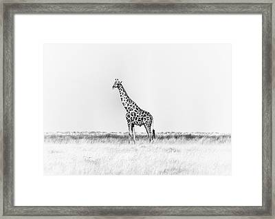 Framed Print featuring the photograph Standing Watch by Rand
