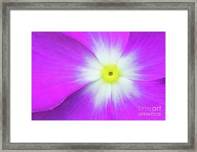Star Light Framed Print by Steven Dillon
