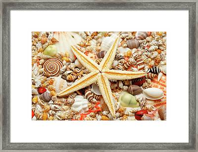 Starfish And Assorted Seashells Framed Print by Imagemore Co.,ltd.