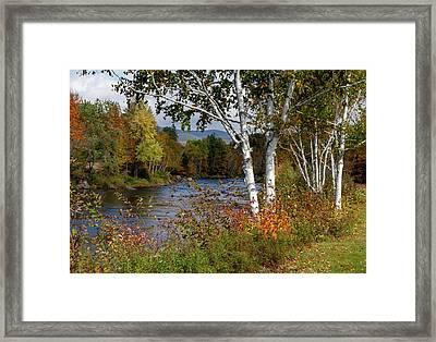 Stark, Nh Fall White Birch  Framed Print