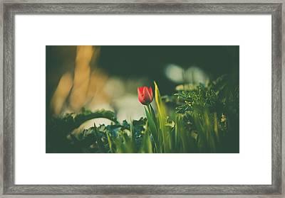 Start Of Spring Framed Print