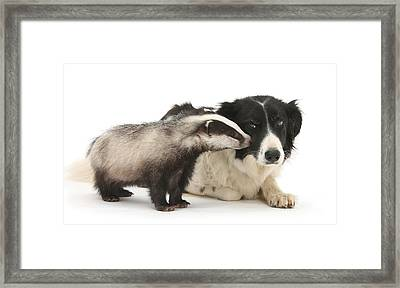 Framed Print featuring the photograph Stop Badgering Me by Warren Photographic