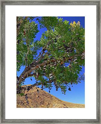 Framed Print featuring the photograph Strange Fruit by David Bailey
