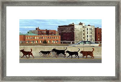 Stray Dogs Stroll Along The Bruckner Framed Print by New York Daily News Archive