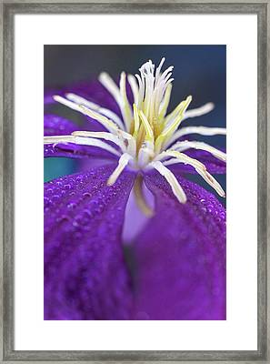 Framed Print featuring the photograph Stretch by Michelle Wermuth
