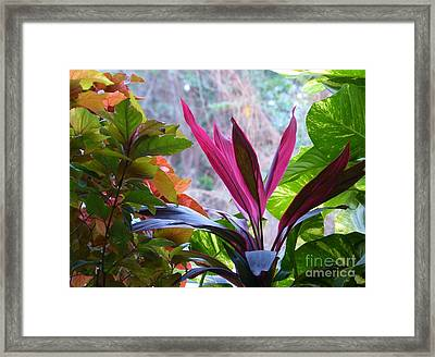 Framed Print featuring the photograph In The Pink by Rosanne Licciardi