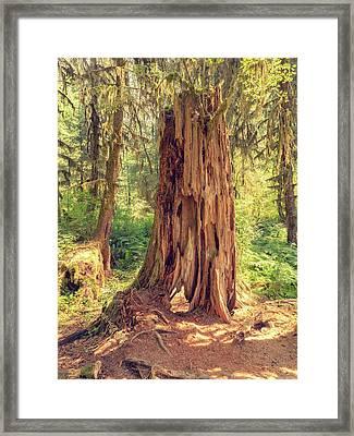 Stump In The Rainforest Framed Print