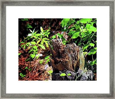 Framed Print featuring the photograph Stumped On Assateague Island by Bill Swartwout Fine Art Photography